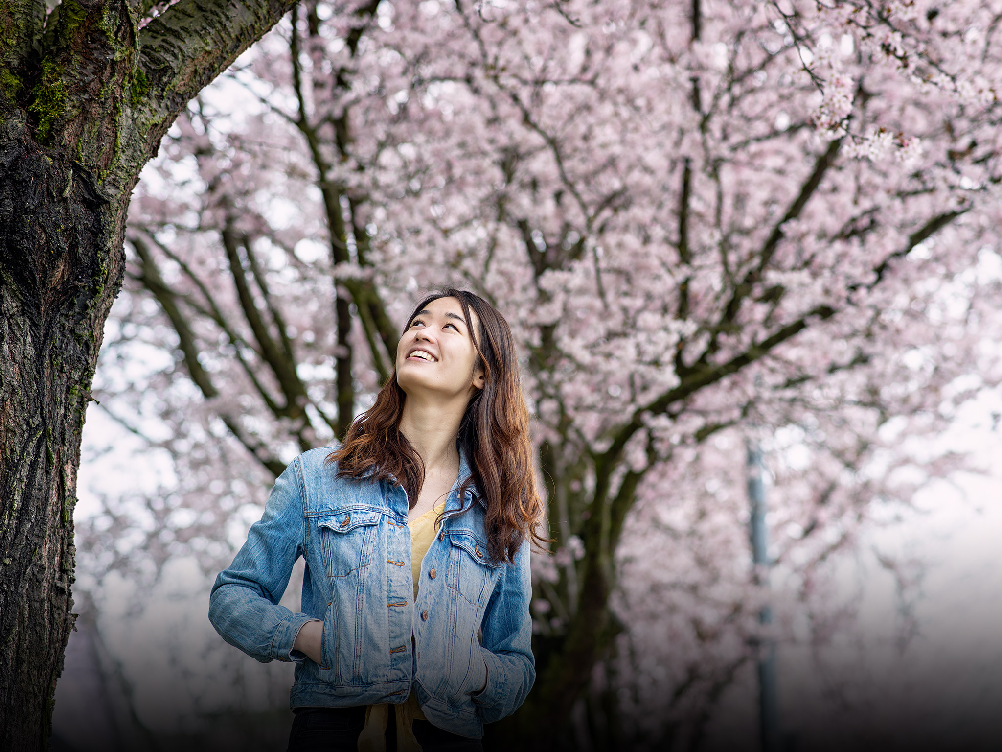 Ringing in Spring: Cherry Blossoms